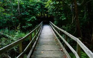 Header-Bridge-in-Forest