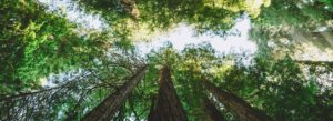 Header-Trees-in-Forest